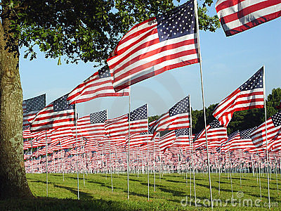 Green Filed With Many American Flags Royalty Free Stock Photo - Image: 945