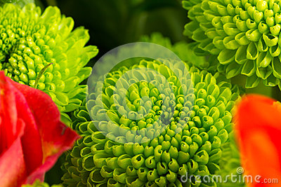 Green Flower Bud