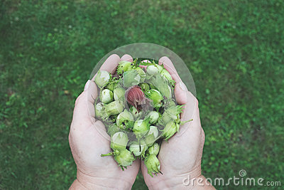 Green Flower Buds On Human Hands Free Public Domain Cc0 Image
