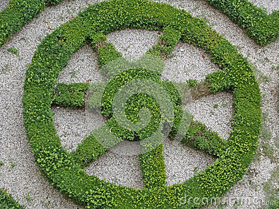 Green flower with the hedge cut into the shape of a star Green