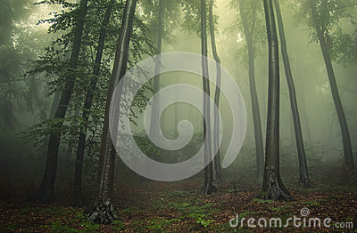 Green fog in a forest in summer