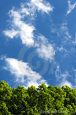 Green foliage against the sky