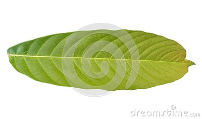 Green foliage tropical leaf on white backgrounds Stock Photo
