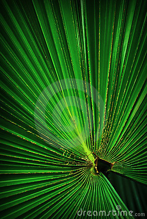 Free Green Footstool Palm Leaf Royalty Free Stock Image - 13282966