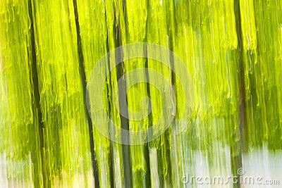 Green forest abstract background