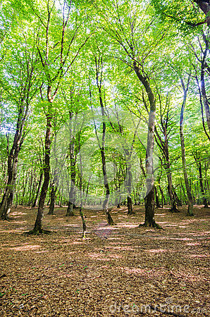 Green forest during bright day
