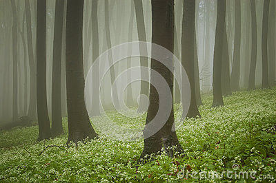 Green forest with flowers on the ground