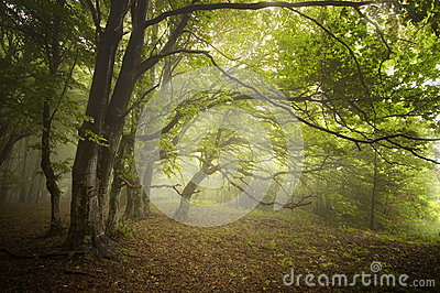Green forest with fog and strange trees in early autumn