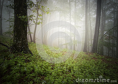 Green forest with fog in summer