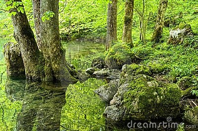Green forest lake