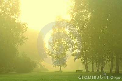 Green forest with morning mist