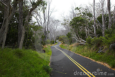 Green forest and road