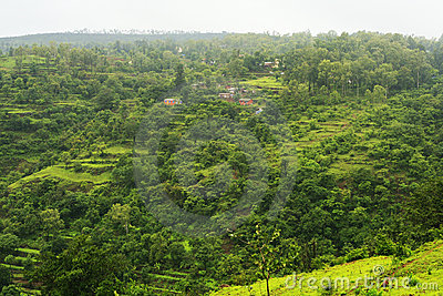 Green forested landscape