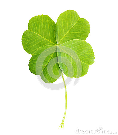 Free Green Four-leaf Clover Leaf Isolated Stock Image - 41225891