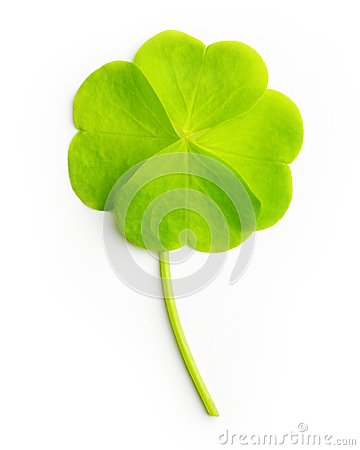 Free Green Four-leaf Clover Leaf Isolated Royalty Free Stock Photos - 41225988