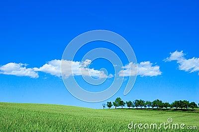 Green för 4 fält