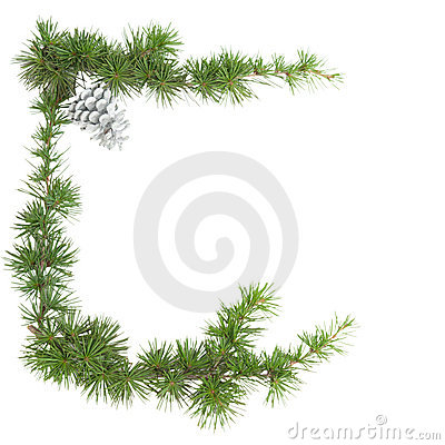 Green frame of a pine branch isolated