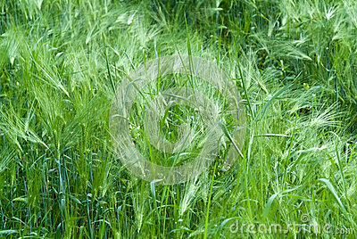Green fresh crops