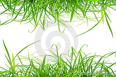 Green fresh grass isolated on the white background