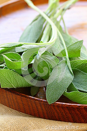 Green fresh sage