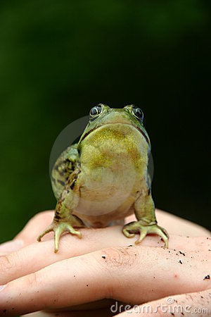 Free Green Frog Stock Image - 1030821