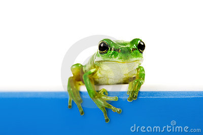 Green frog looking out of cooking pot