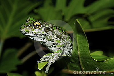 Green Frog on Plant