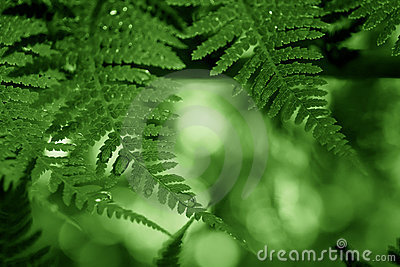 Green frond frame