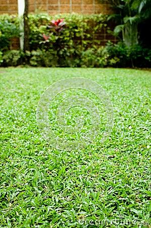 Free Green Garden Royalty Free Stock Photos - 3775958