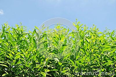 Green Garden Plants