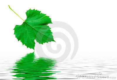 Green grape leaf with water reflection