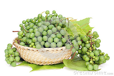 Green grapes for dry wine