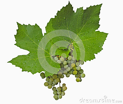 Green grapes and label