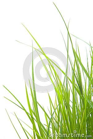 Free Green Grass Stock Photos - 4334343