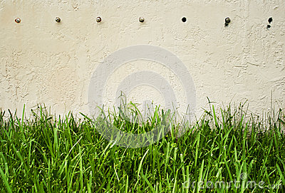 Green grass against wall
