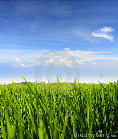 Free Green Grass And Blue Sky Stock Photography - 7596872