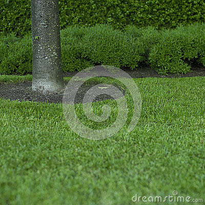 Free Green Grass And Tree Trunk Stock Image - 47133941