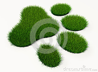 Green grass animal footprint
