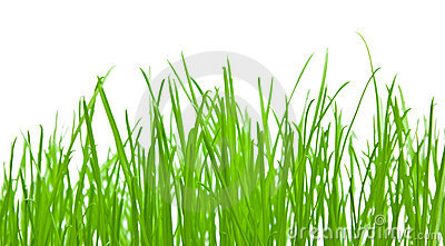 Green Grass Background Stock Images - Image: 7191394