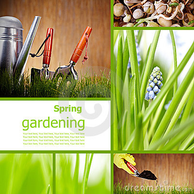 green grass background - collage