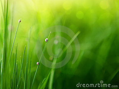 Green grass background with color bokeh