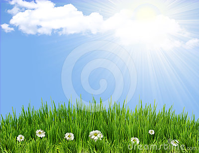 Green grass background with flowers