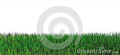 Green grass background. Nature