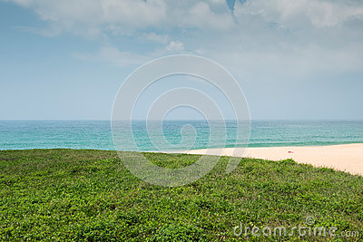 Green grass with beach