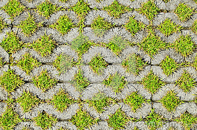 Green Grass In The Block Brick Royalty Free Stock