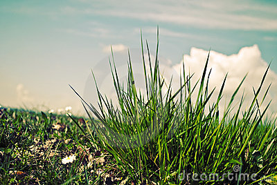 Green grass and the blue sky