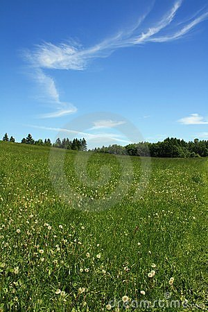 Green grass blue sky with clouds