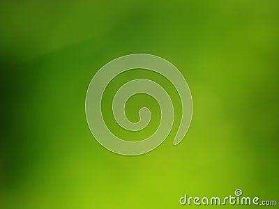Green grass blur background