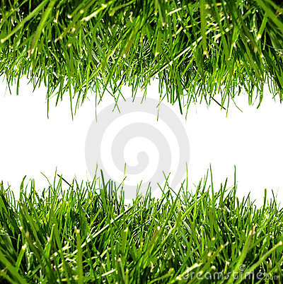 Green grass border on white