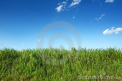 Green grass in clear blue sky